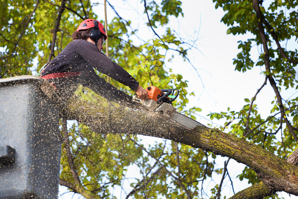 tree trimming in West Chester PA